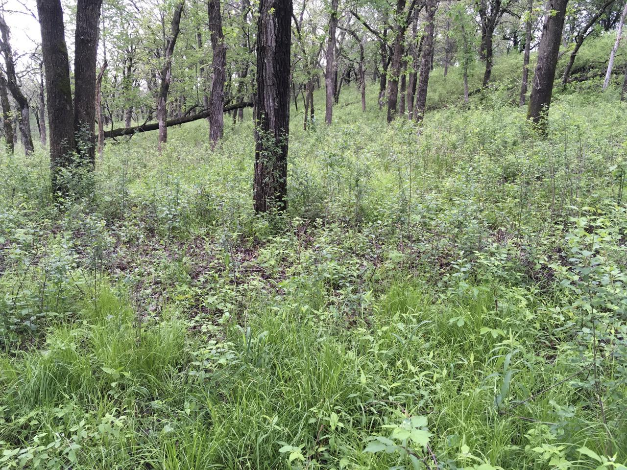 The woodland at the Sand Coulee