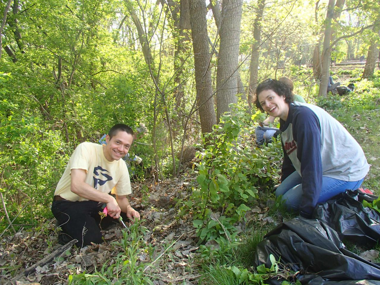 Volunteers pull garlic mustard at our last pledge to pull in 2019