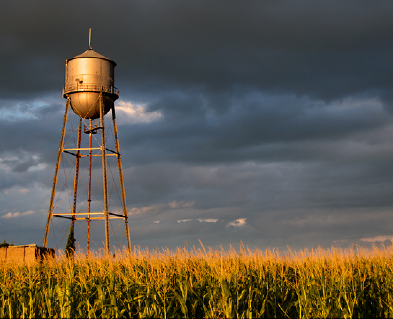row crops and water tower