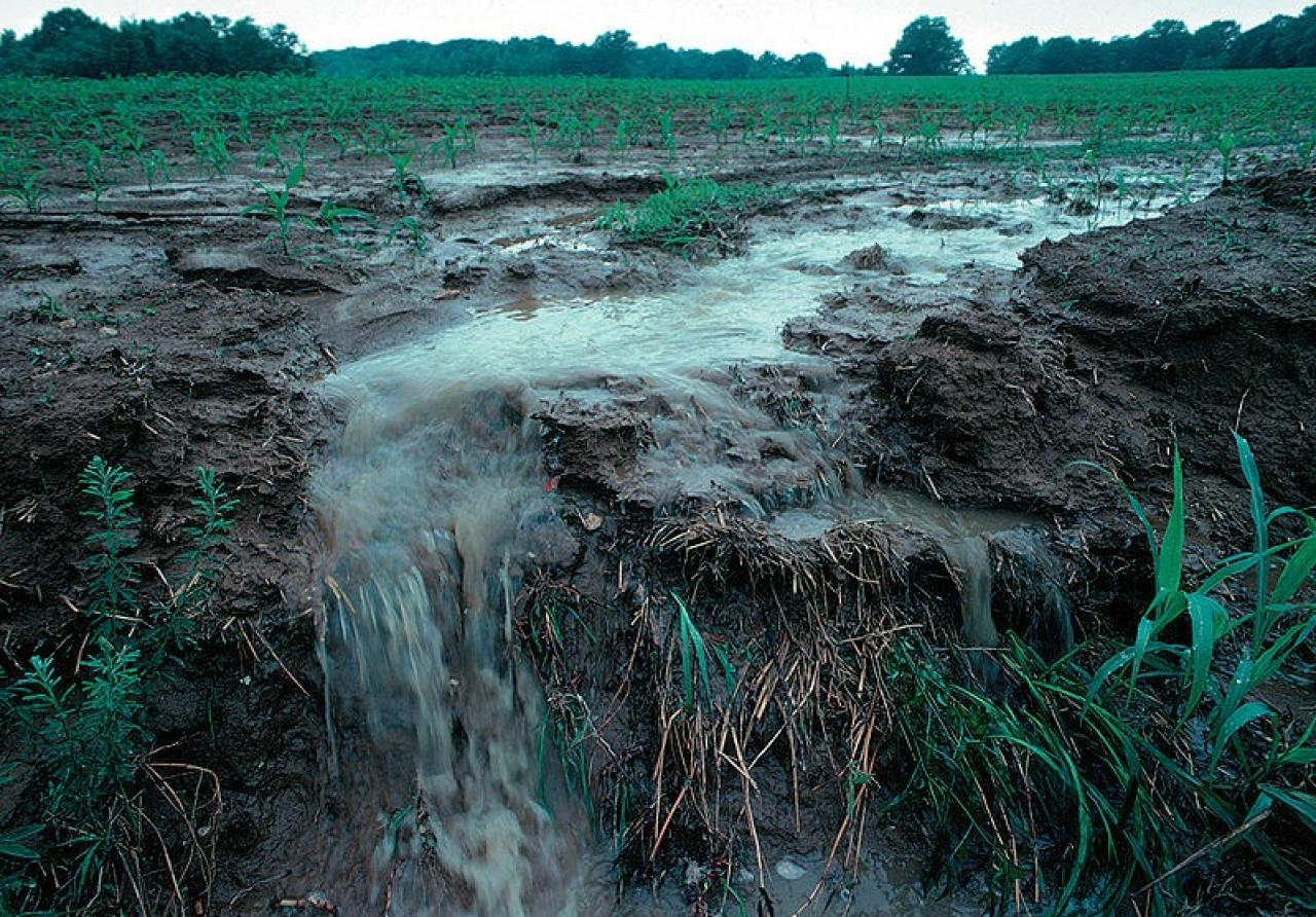 Water running off farm fields carries pollution into the nearest waterways.