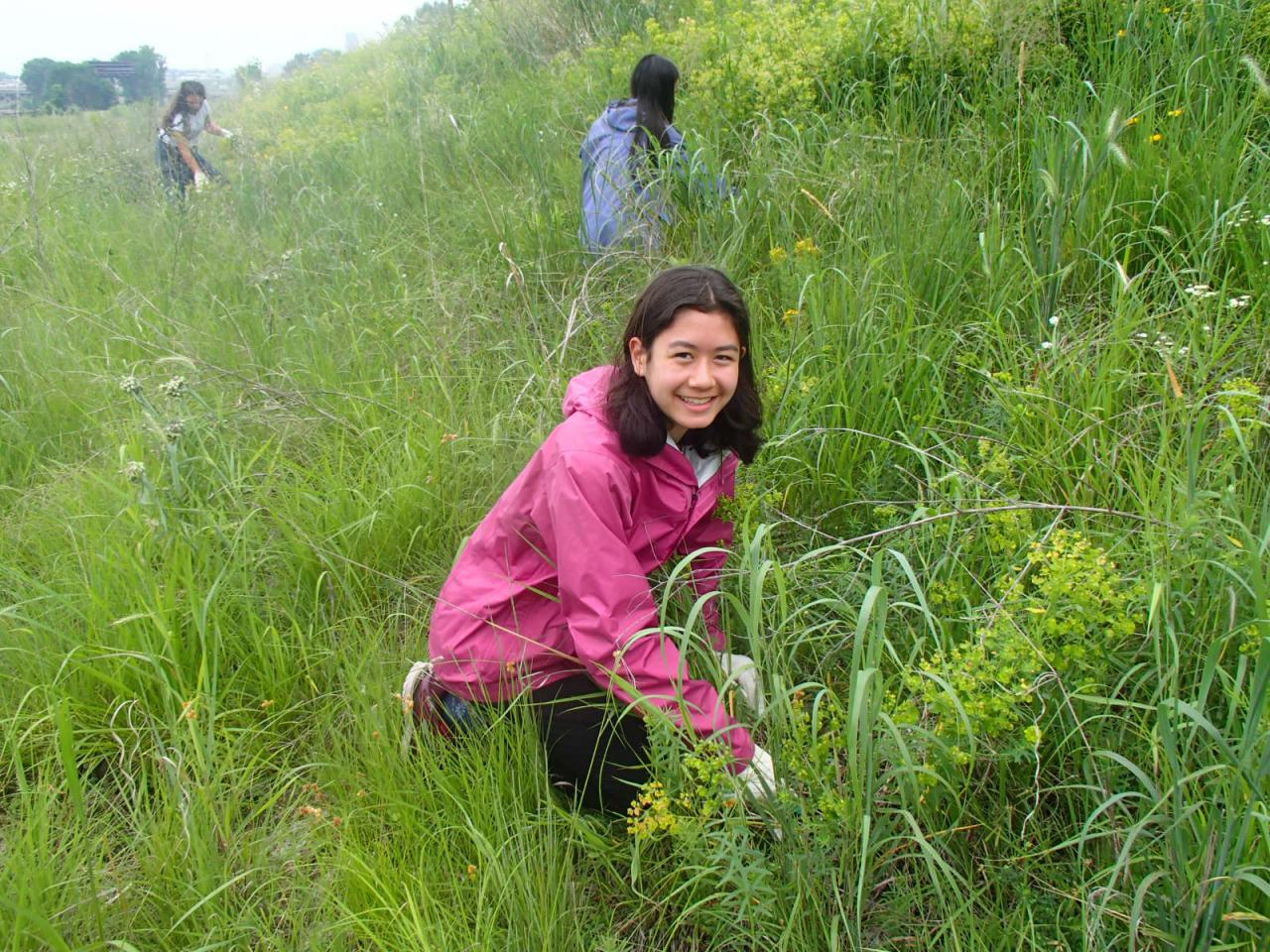 One of the program participants removes invasive species on a rainy day at Trout Brook Nature Sanctuary