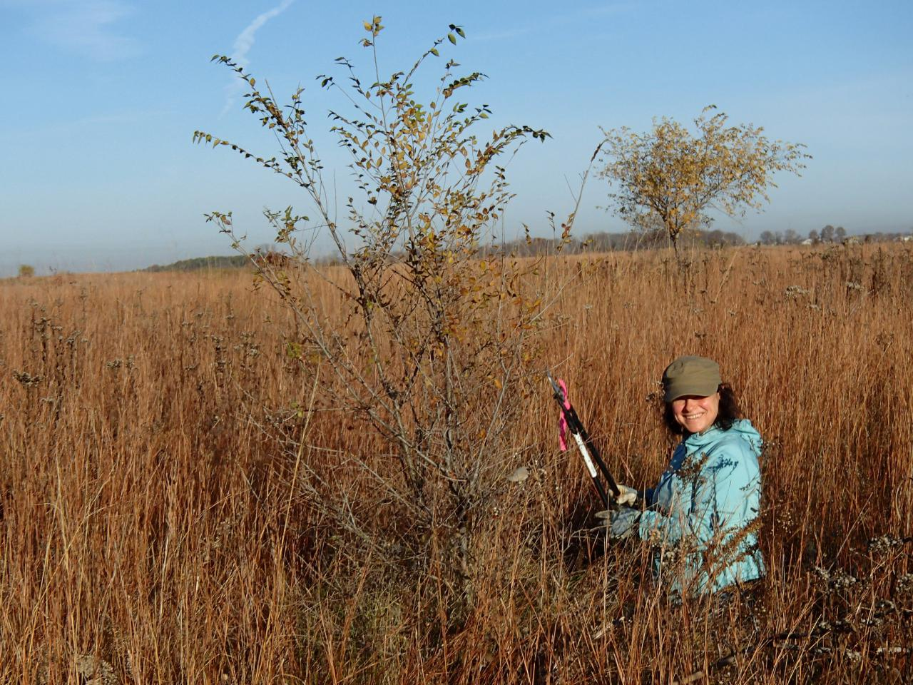 Grey Cloud Dunes SNA sumac lopping volunteer