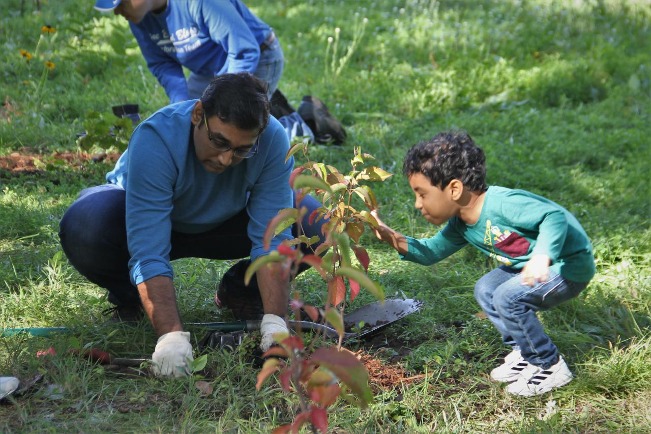 Volunteers of all ages have helped to restore the forest on Nicollet Island. Here, two plant a tree together.