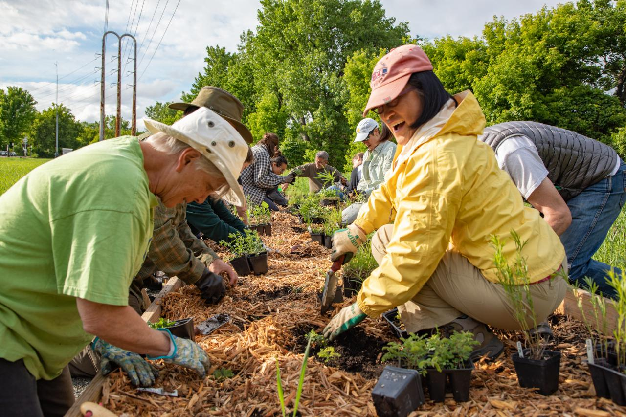 Volunteers plant the demonstration prairie on Nicollet Island