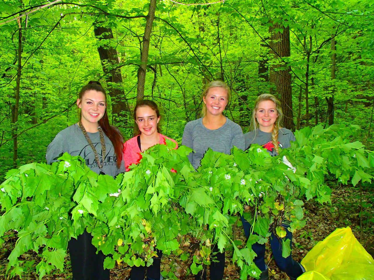 Volunteers holding garlic mustard at the Sand Flats
