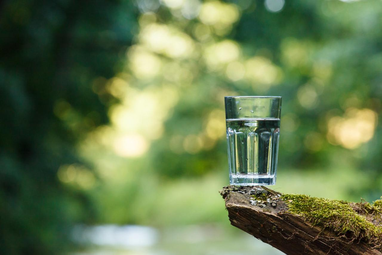 Glass of water rests on a branch over a stream.