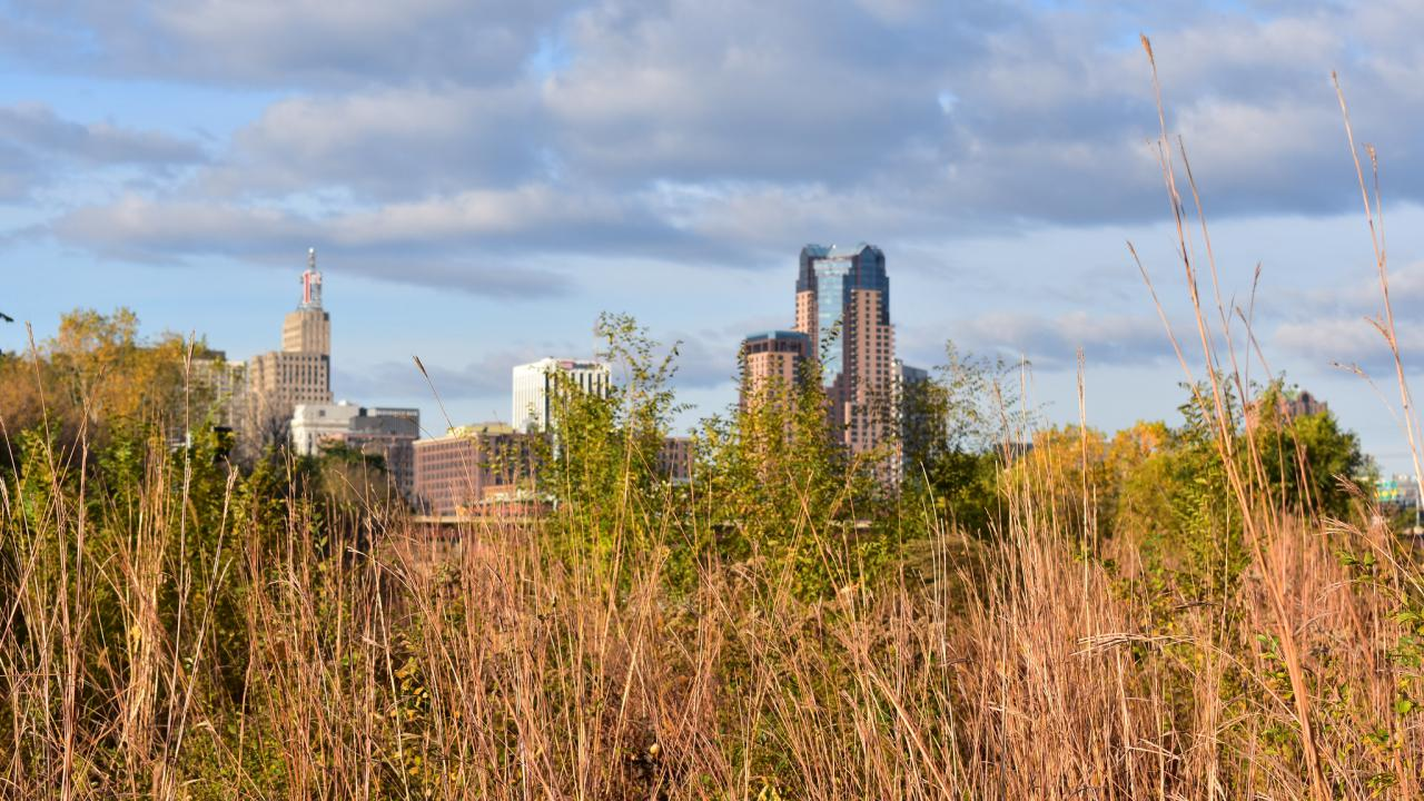 Foreground: a grassy field in autumn. Background: St. Paul downtown buildings