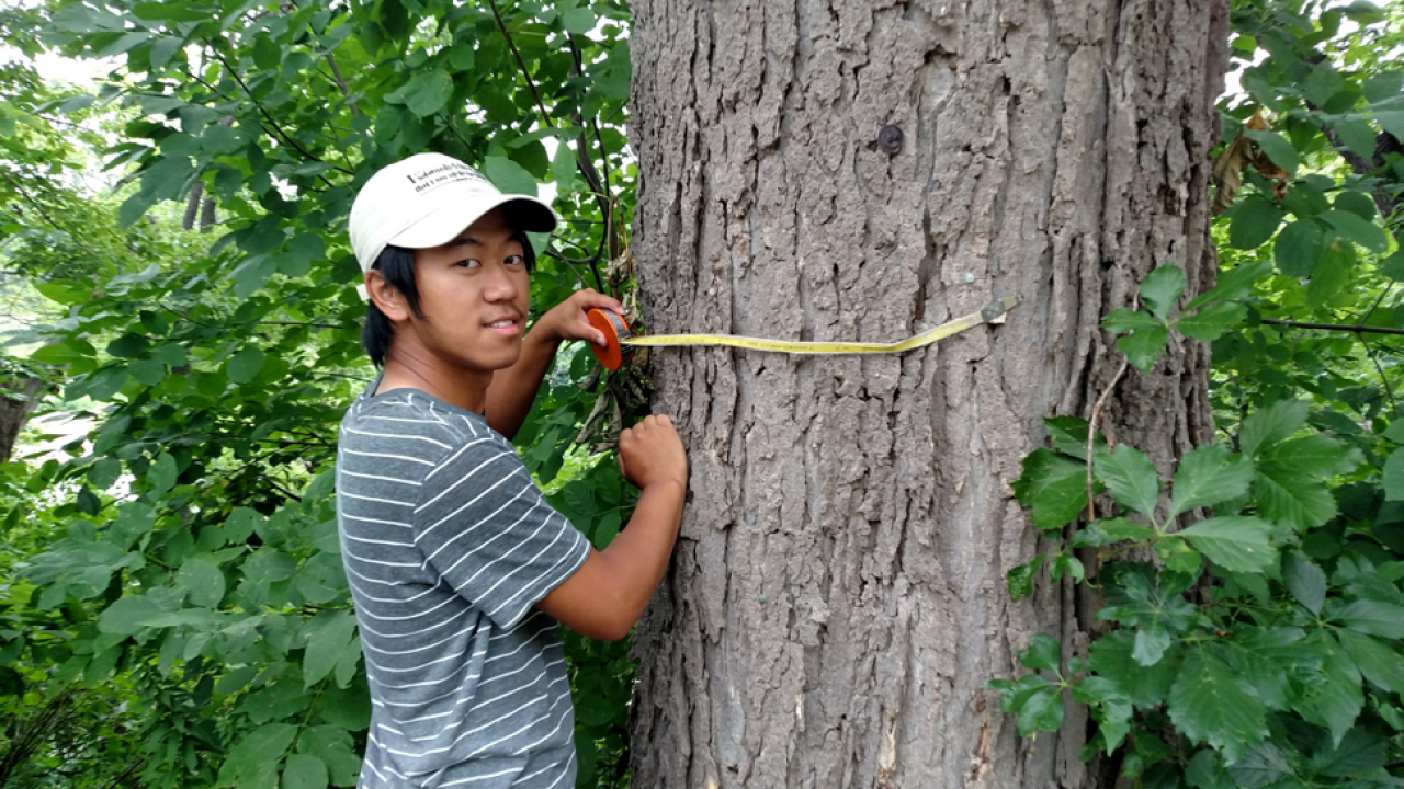 Yengsoua Lee, an MWMO Green Team alumni intern, helps survey trees on Nicollet Island as part of his time with FMR.