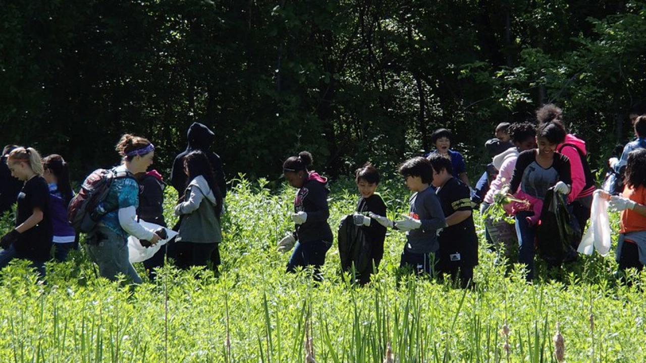 Students work at Phalen wetlands to help keep it healthy